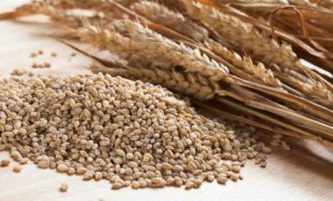 propiedades de la cebada